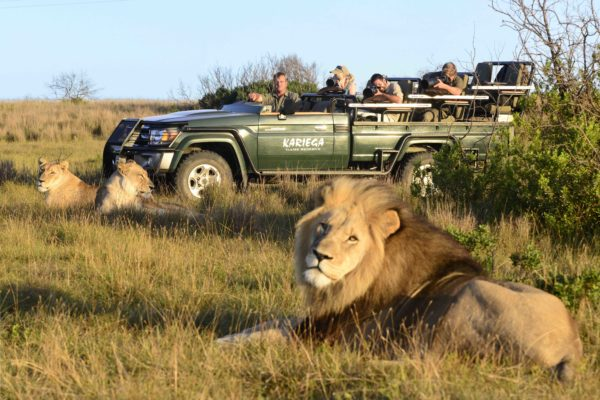 Lion Watching at Kariega Game Reserve